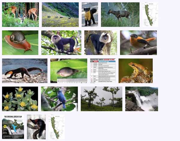 west_ghats_ecology_animals_screenshot_03