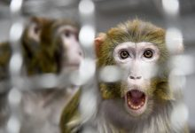 Photo of Elon Musk's Neuralink Monkey Movie Raises Queries From Scientists