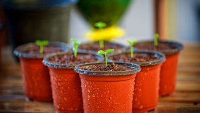 Photo of Container Gardening: 7 Vegetables That You Can Grow In A Pot At Home