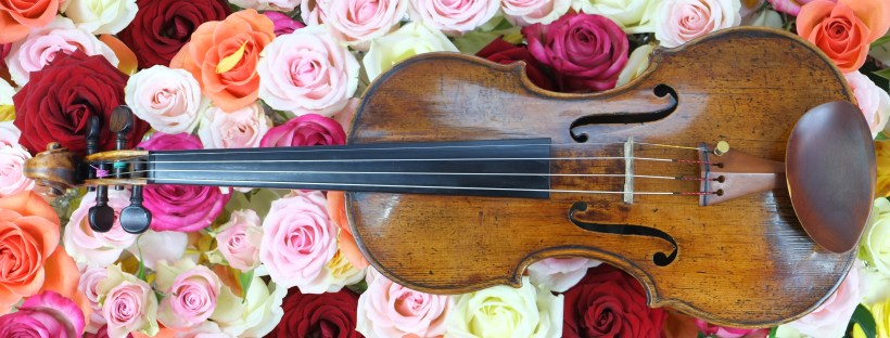 Violin on multicoloured roses - India Rose Strings Blog - Top tips and 'How To' advice on planning the music for your wedding, party or event