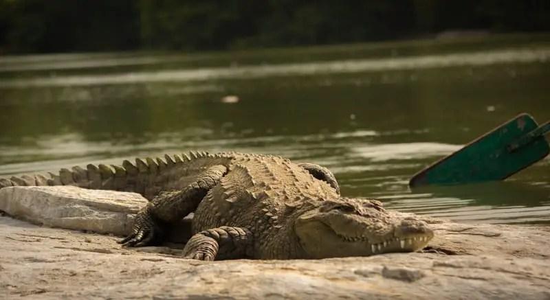 BHAGABATPUR CROCODILE SANCTUARY