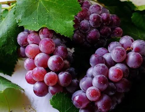 Grapes in India Language