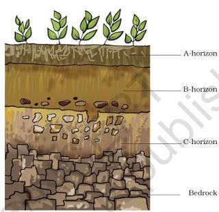 http://3.bp.blogspot.com/-4CueLdL3Fdg/VdYzURVC5JI/AAAAAAAAAEw/3iH1ayqpCI8/s320/Soil-profile-class7-science-ncert.JPG