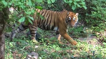 Zone 7 Togress Ranthambore; Photo by M. Karthikeyan