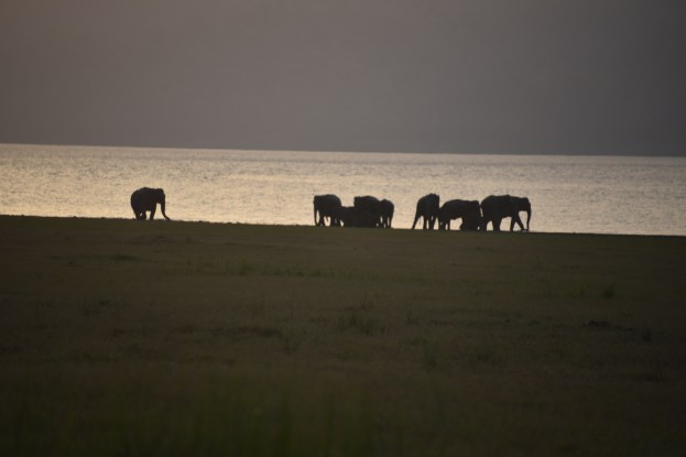 Wild Elephants Herd at Ramganga River, Jim Corbett National Park; Photo by Pooja Parvati