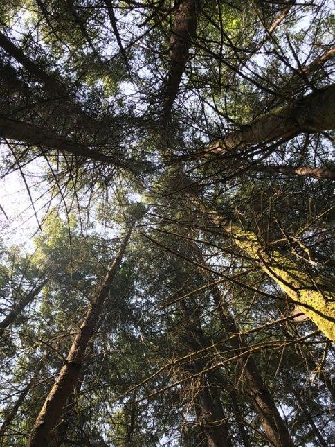 forest pickathon
