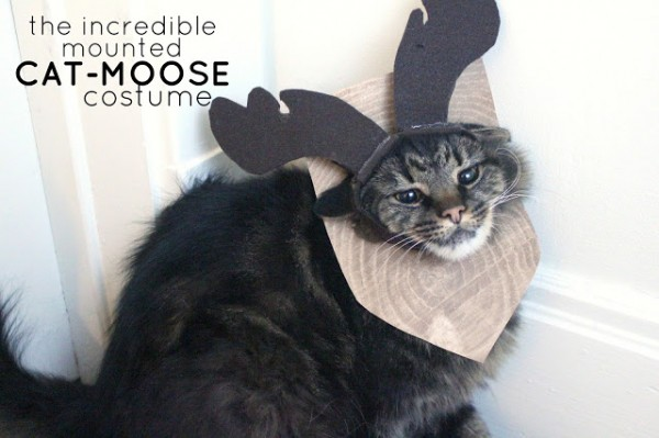 The Incredible Mounted Cat Moose Costume 2