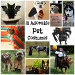10 Adorable pet Costumes You Can DIY