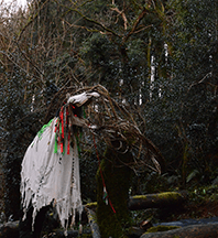 Mari Lwyd approves of her new shrine