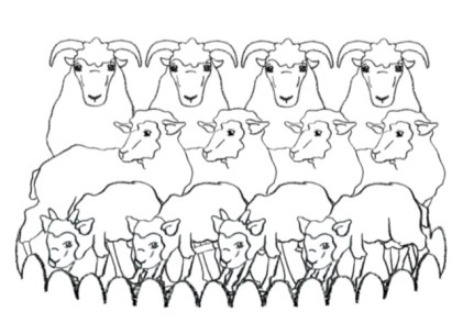 On the Domestication of Sheep