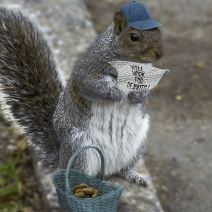 distracted squirrel