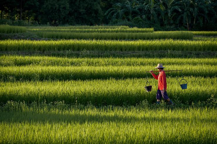 China's lange mars naar totale voedselzekerheid