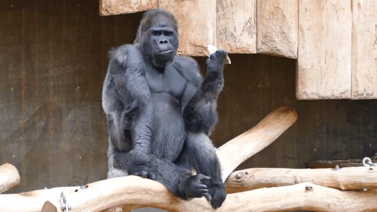 Vuurdrama in Krefeld Zoo: wat is hier mis?