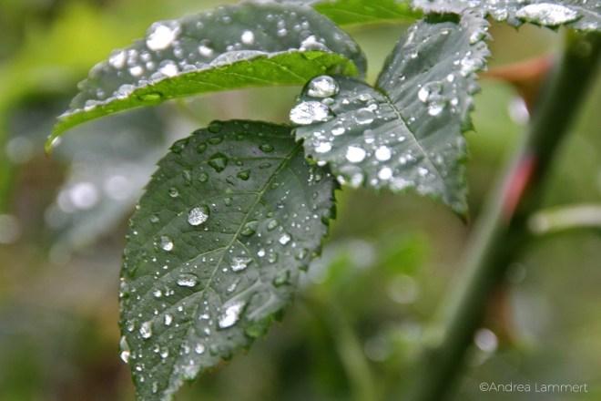 Ideen für Regenwetter