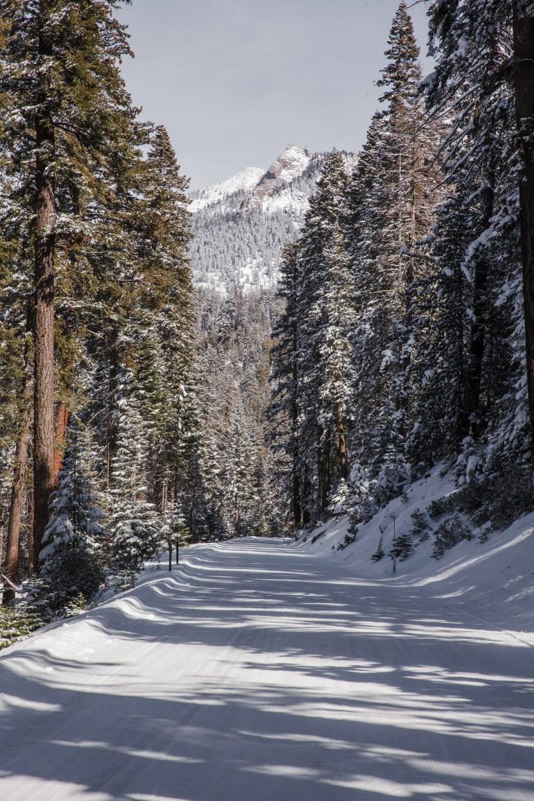 Sequoias-54