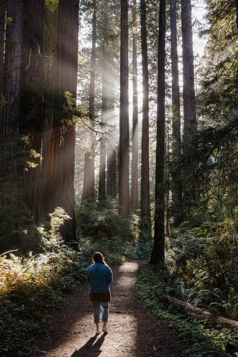 Redwoods-SF-79