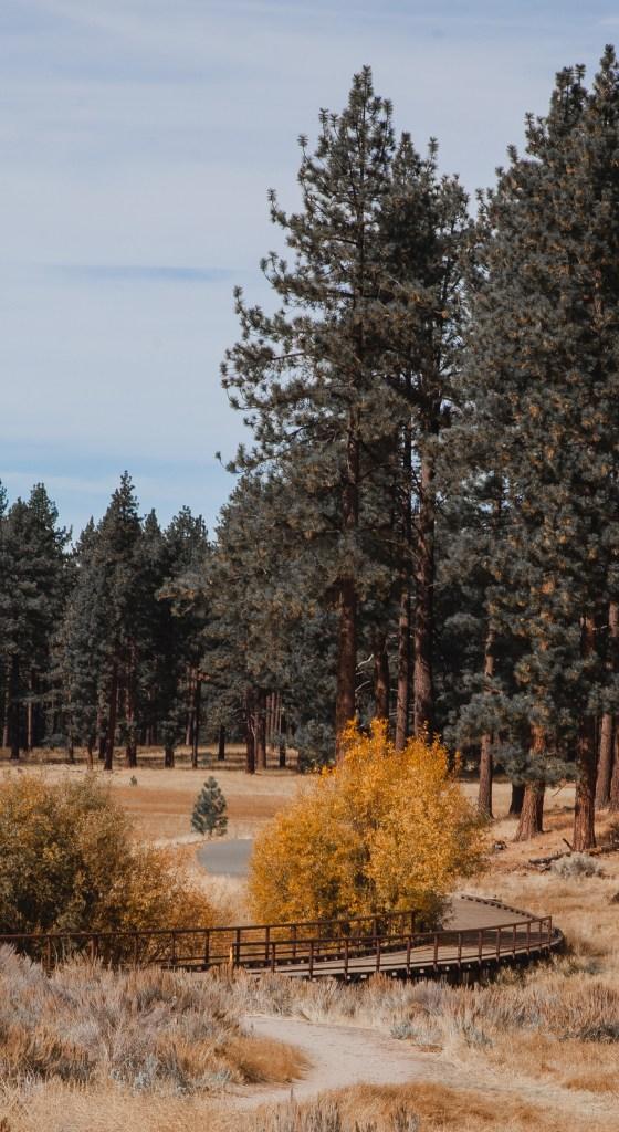 Nevada Beach Forest Bike Path