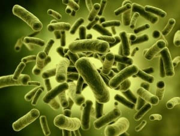 Lactobacillus-Casei-Supplements-300x227