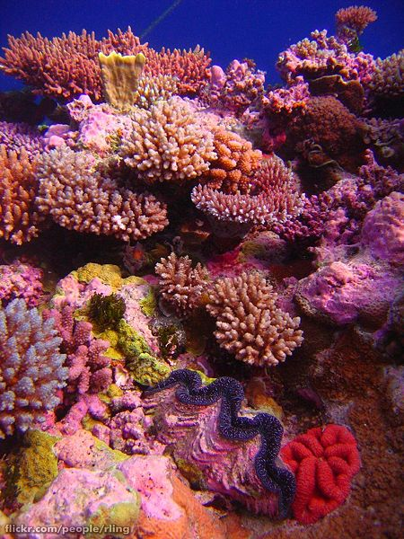 coral reef off of Australia