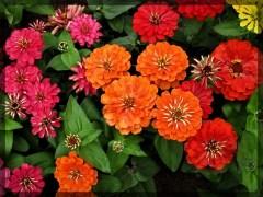 flower-11b