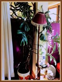 plant-2b