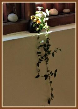 plant-6b2