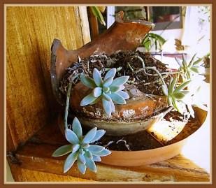 succulent-5b