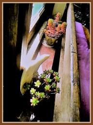 succulent-9b