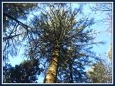tree-2b