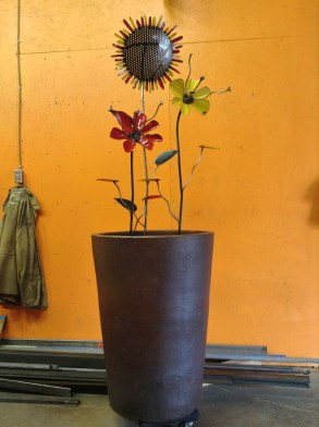 triple flower, large pot used to control soil bank in the landscape- 6' H