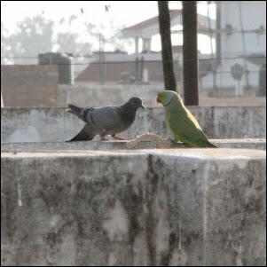 Globaalia rakkautta Intiassa