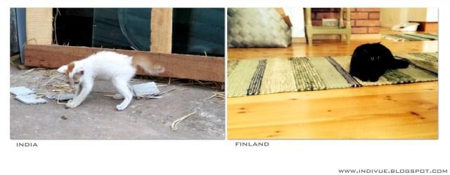 Intialainen kissa ja suomalainen kissa