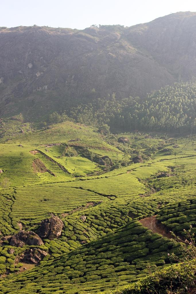 Муннар Керала Индия