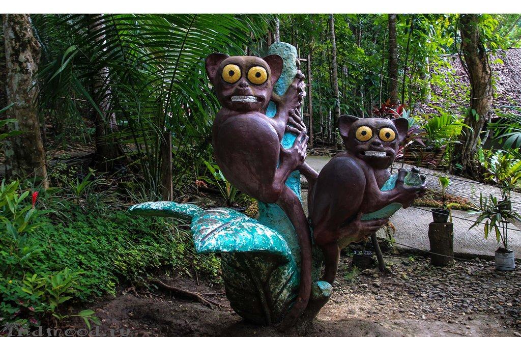 Острова Филиппин: Бохол. Долгопят-тарсиер.