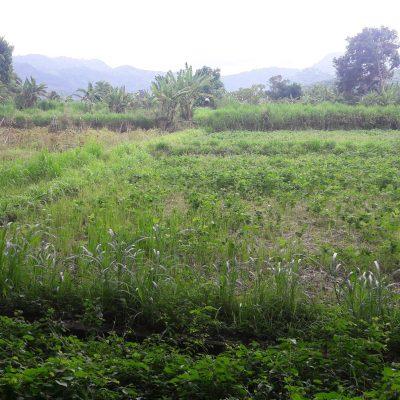 Land for Sale – Jalan Bypass IB Mantra, Denpasar