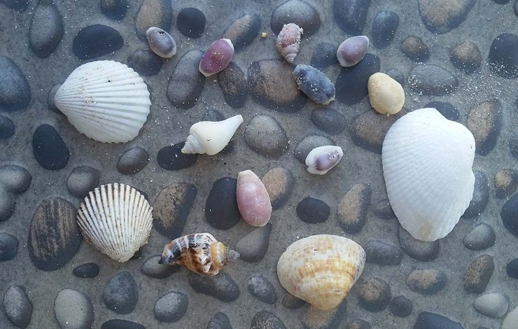 Lombok shell collection
