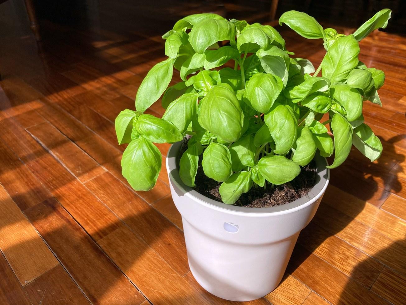 Xiaomi RoPot - vaso intelligente per piante - lifestyle