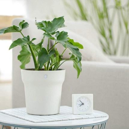 Xiaomi RoPot - vaso intelligente per piante
