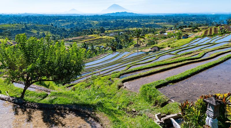 手付かずの自然が残るバリ島の世界遺産、ジャティルイのライステラス