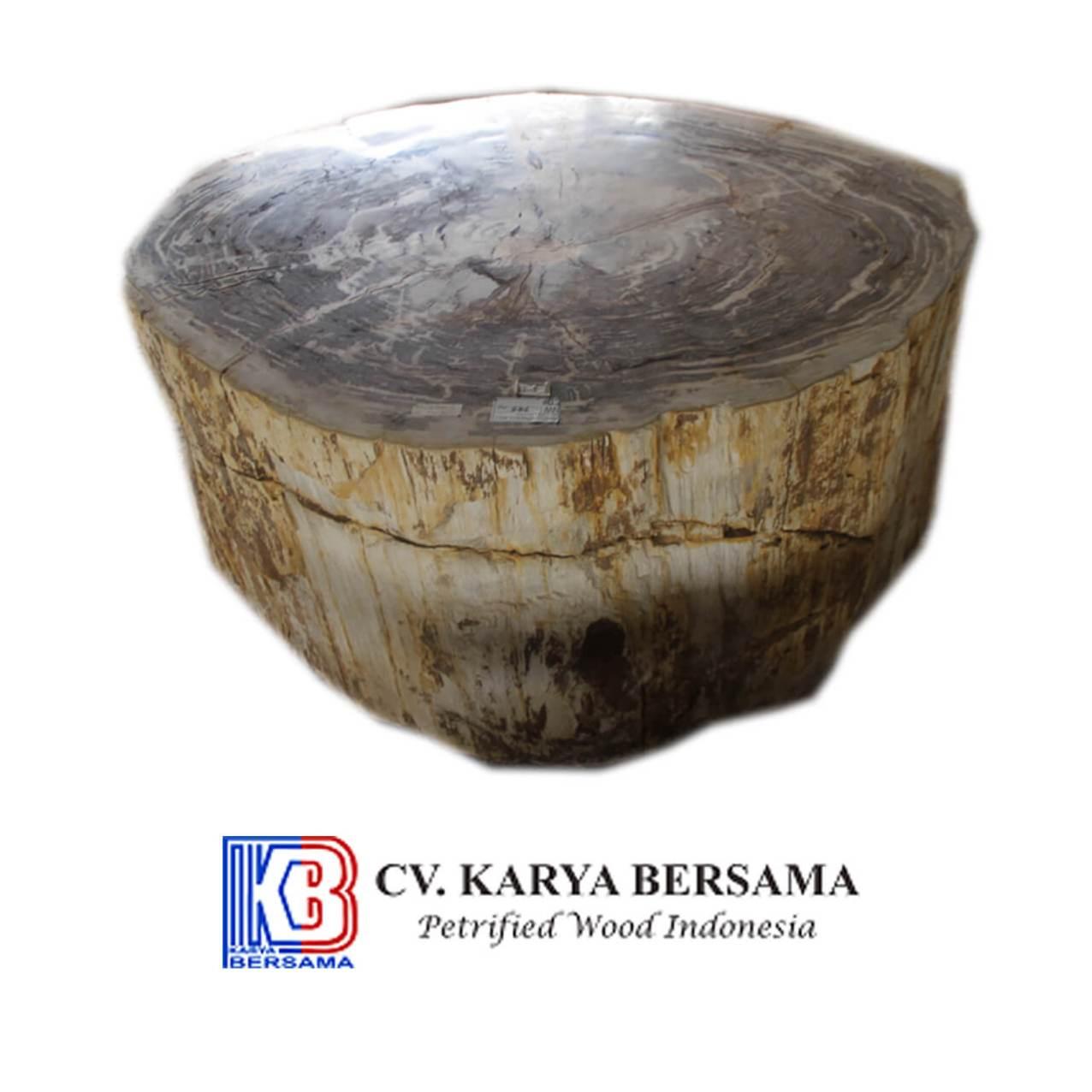 Petrified Wood Big Table