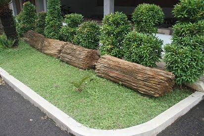 Indonesia Petrified Wood 1