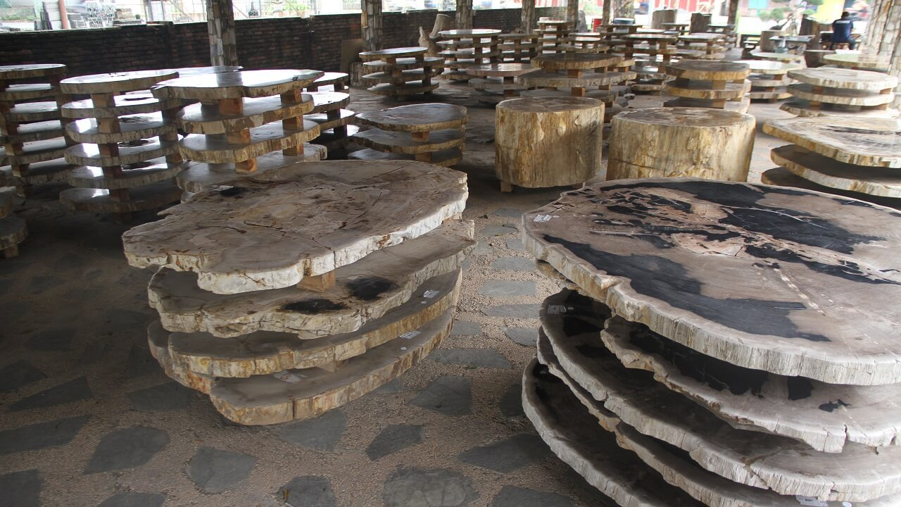 Gallery Slab Petrified Wood Indonesia
