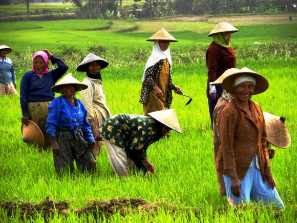 Giava contadine al lavoro