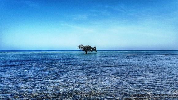 mangrovia solitaria