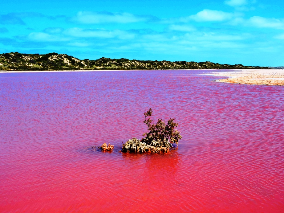 Australia Hutt lagoon particolare