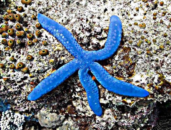 Indonesia Il triangolo dei coralli