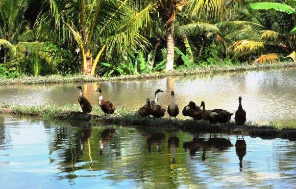 Bali gli amici expat che problema