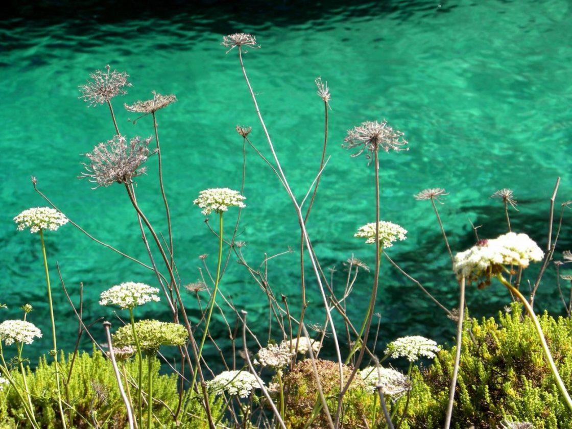gozo fiori sul mare