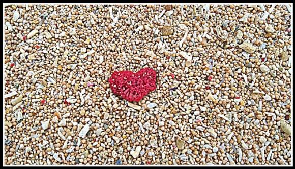 Lembongan cuore di corallo