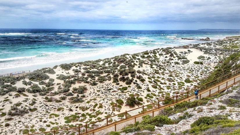 kangaroo seal bay view
